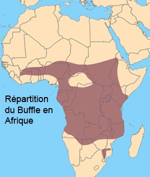 Répartition du Buffle