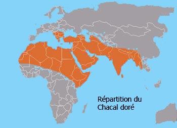 Répartition géographique du Chacal doré
