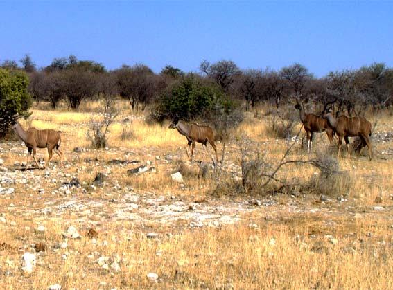 Pin dans la savane africaine on pinterest - Animaux savane africaine ...