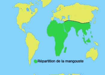 repartition de la mangouste