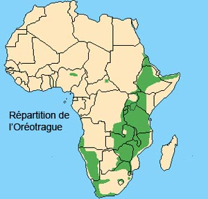 Répartition de l'oreotrague