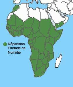 repartition geographiqque de la Pintade de Numidie